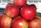 Õunapuu 'Aport'