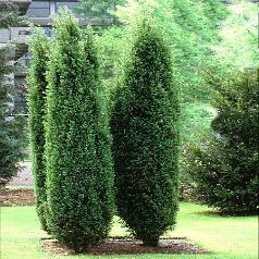 puukool istikud viljapuud haljastus. Black Bedroom Furniture Sets. Home Design Ideas